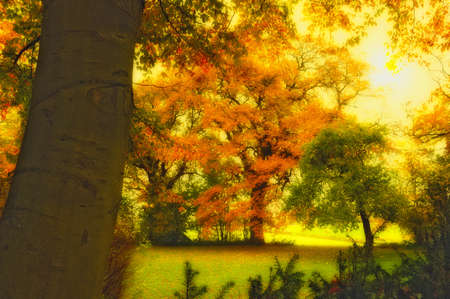 A  photo of Autumn forest and sun Stock Photo - 12320480