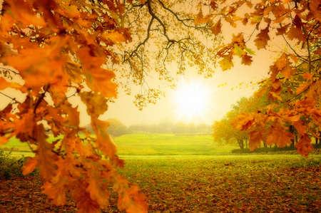 秋の森と太陽の写真 写真素材