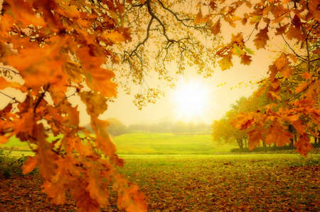 A  photo of Autumn forest and sun Stock Photo