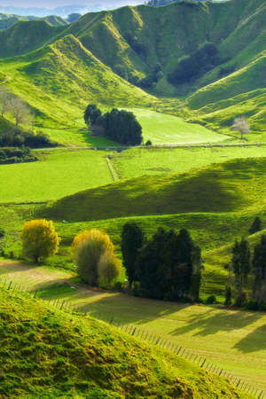 A photo of green hills in New Zealand (North) Stock fotó