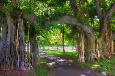 A photo of aTropical tree - Waikiki, Hawaii photo