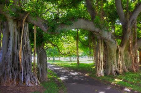 A photo of aTropical tree - Waikiki, Hawaii Stock Photo