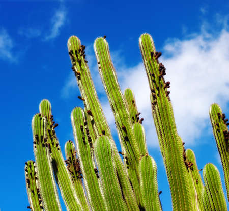 A photo of The Organ Pipe Cactus photo