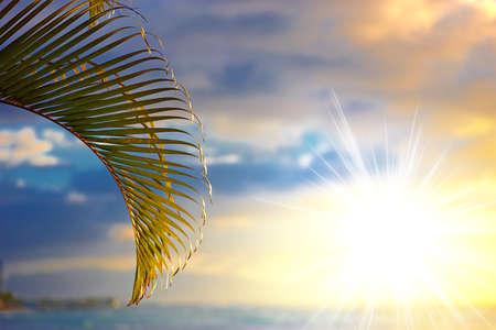 A photo of palm leaf and the sky Reklamní fotografie