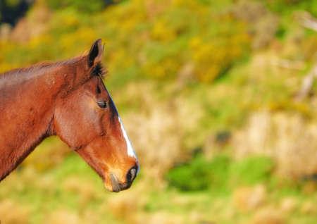 context: Brown horse in natural context