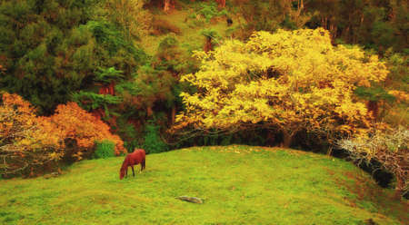 grazing land: Brown horse in natural context