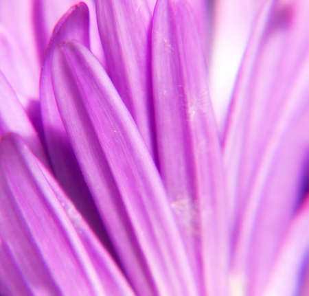 A macro photo of a purple flower - nice as background photo