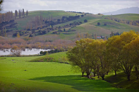 river scape: River scape from New Zealand Stock Photo