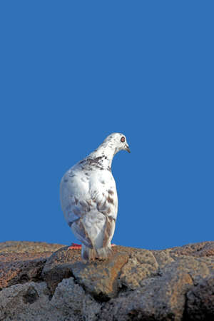 a photo of a white dove and blue sky Stock Photo - 12565006