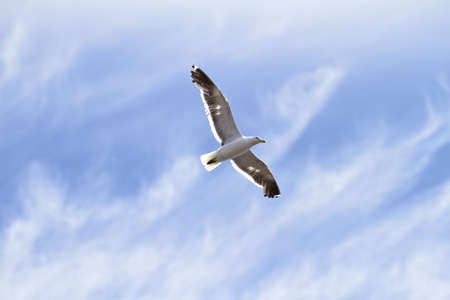 wingspread: A photo of a Seagull and blue sky Stock Photo