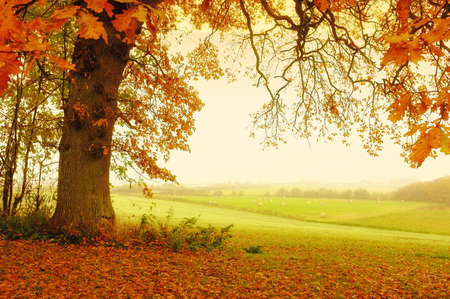 A photo of trees an autumn morning