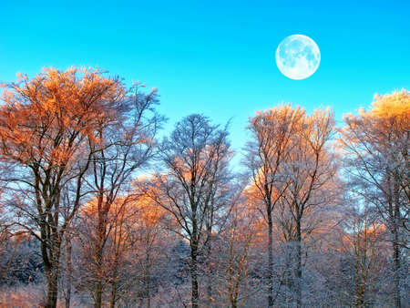 A winter landscape with moon and dark blue sky Stock Photo - 12564793