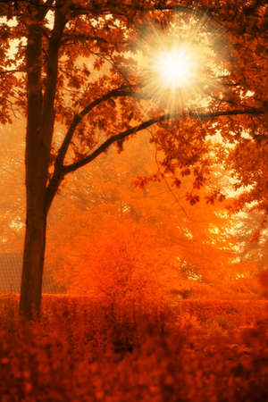 A  photo of Autumn forest and sun photo