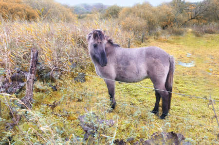 A  photo of pony in natural landscape photo