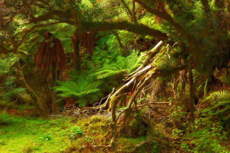 A photo of the rain forest in New Zealand Stock Photo - 12564622