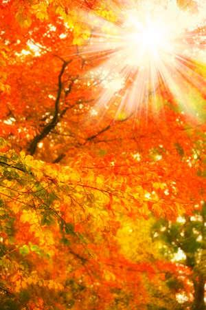 A  photo of Sunrise in autumn forest Standard-Bild