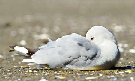 requesting: A  photo of a sea gull