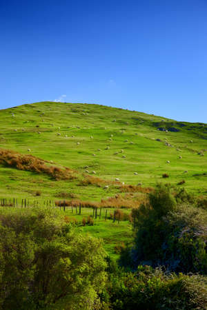 A photo of green hills in New Zealand (North) Stock Photo - 12564620