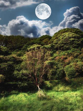 luz de luna: Paisaje foto de luna - natural