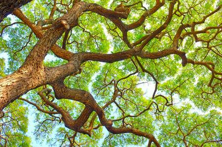 A photo of African wilderness Zdjęcie Seryjne - 13133539