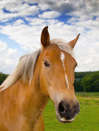 equitation: A photo of brown horse in nature Stock Photo