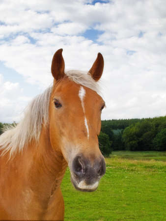Une photo de cheval brun dans la nature Banque d'images - 13127166