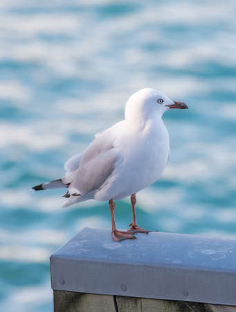 A photo of sea gull photo