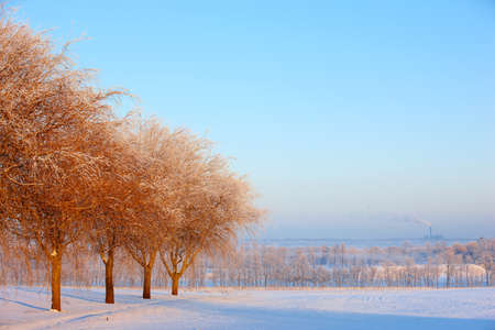 snowlandscape: Beautiful winter landscape at early sunset