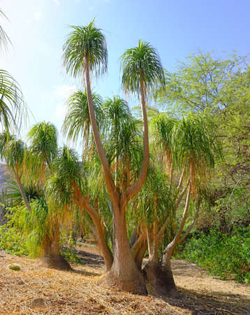 A cactus photo with lots of details, USA photo