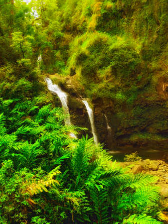 A photo  of rainforest and waterfall and river Stock Photo - 13133509