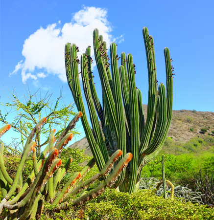 sonoran: A photo of cactus landscape (inside volcano Koko Head, Oahu, Hawaii)