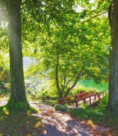 serene landscape: A photo of a small bridge in the forest