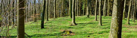 A photo of forest in springtime photo