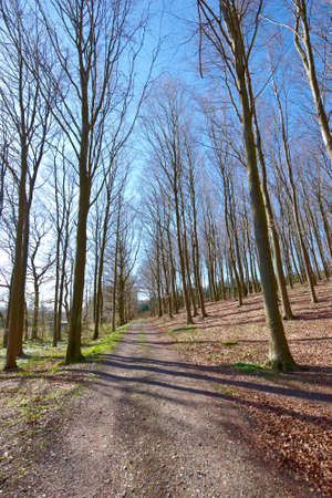A photo of forest in springtime Stock Photo - 13923468