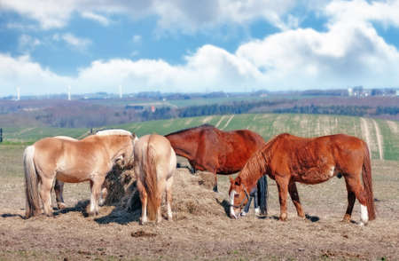 A photo of a group of horses eating photo