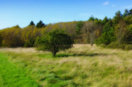 Photo of swamp and meadow - Denmark Stock Photo - 13967017