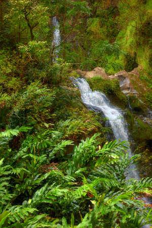 A photo waterfall in rain forest - Maui photo