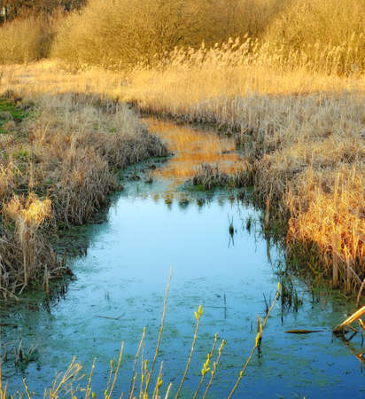 mire: A photo ofPhoto of swamp and meadow - Denmark
