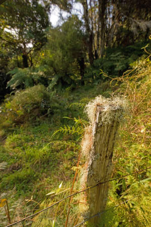 A photo of an old Tree stump in nature photo