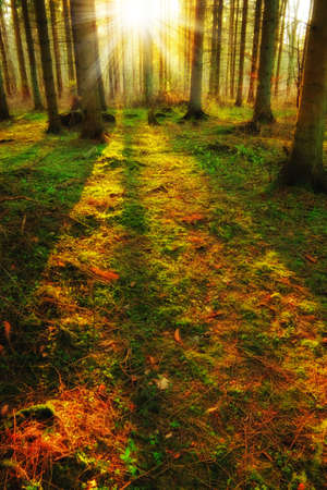 A morning photo of autumn forest photo