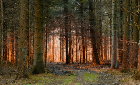 A morning photo of autumn forest Stock Photo - 14637781