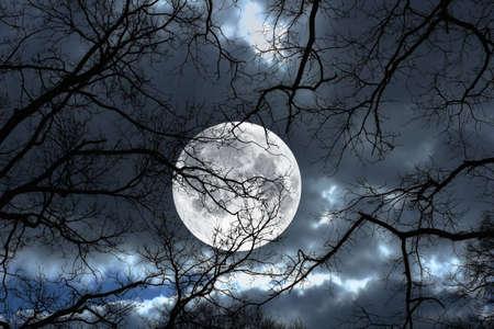 Foto van een de maan, nacht en winter boom