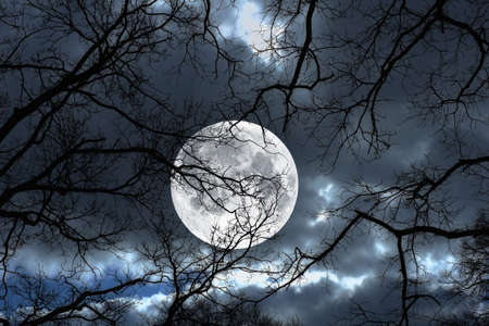 spooky: Photo of a the Moon, night and winter tree