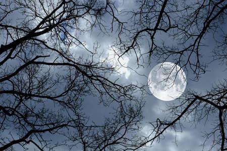 Foto von einem Mond, Nacht und Winter Baum