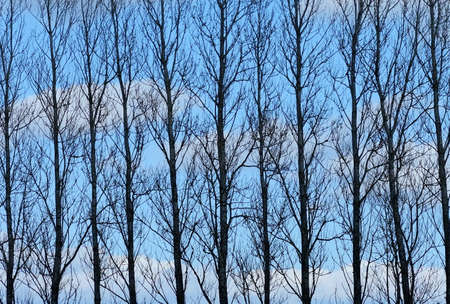 depressive: A photo of a silhouette of trees and blue sky with clouds