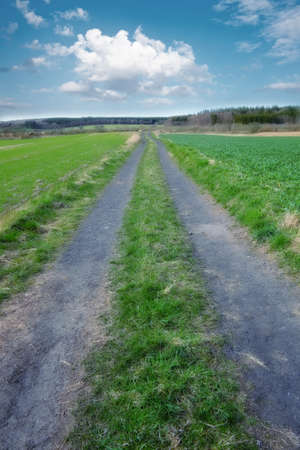 Dirt road in the meadow - Denmark photo