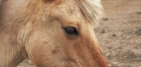 A photo of a brown horse photo
