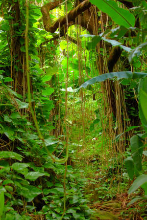 A photo Hawaiian rain forest photo
