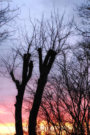 an photo of Winter sunset and cultivated trees photo