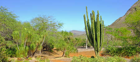 A photo of cactus wilderness in USA photo